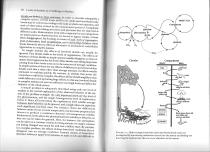 tree-as-ecosystem.jpg