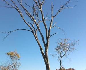 naked tree crop